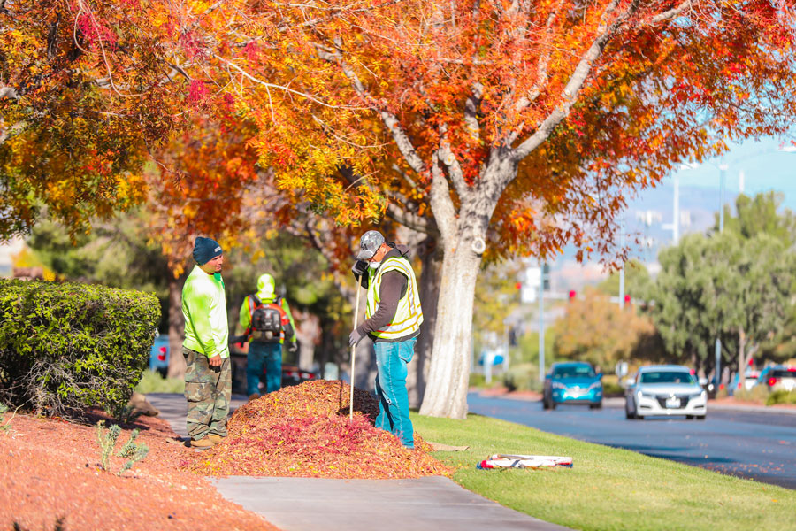 Handymen rake fallen leaves in the affluent Las Vegas Valley area neighborhood of Seven Hills on a beautiful Autumn morning. Henderson, Nevada, November 13, 2019. Photo credit: Chara Stagram / Shutterstock.com, licensed.